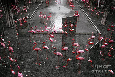 Poster featuring the photograph Flamingo by Setsiri Silapasuwanchai