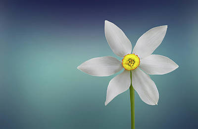 Flower Paradise Poster by Bess Hamiti
