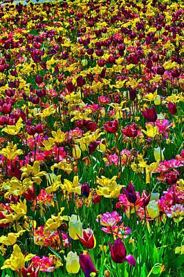 Flowers. Koblenz. Germany. Poster by Andy Za