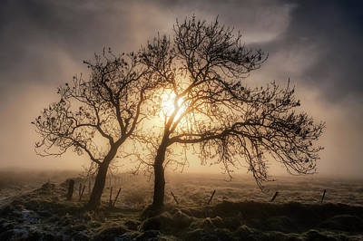 Poster featuring the photograph Foggy Morning by Jeremy Lavender Photography