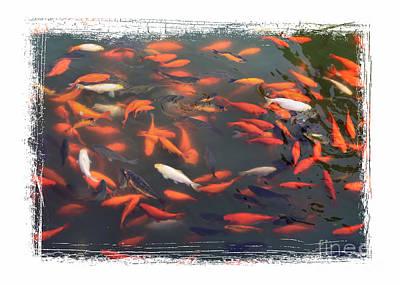 Koi Pond With Framing Poster