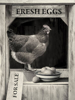 Poster featuring the photograph Fresh Eggs by Robin-Lee Vieira