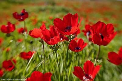 Full Bloom Anemone Poster