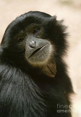 Funky Gibbon Poster