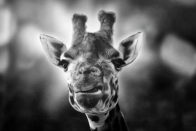 Giraffe Poster by Joana Kruse