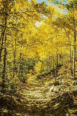 Golden Aspens In Colorado Mountains Poster