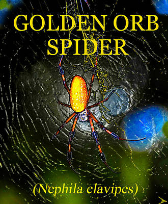 Golden Orb Spider Poster by David Lee Thompson