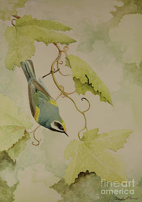 Golden-winged Warbler Poster