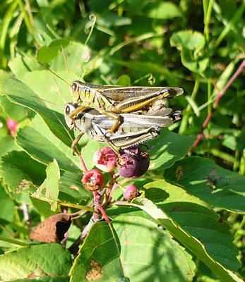 Grasshopper Love Poster