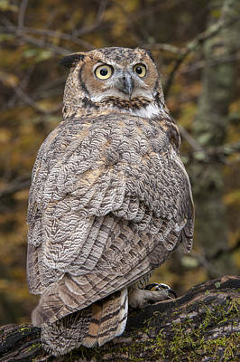 Great Horned Owl Poster by Tyson Smith