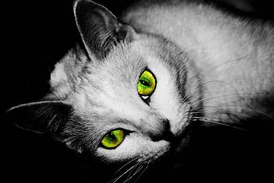 Green Eyes Poster by Angie Tirado