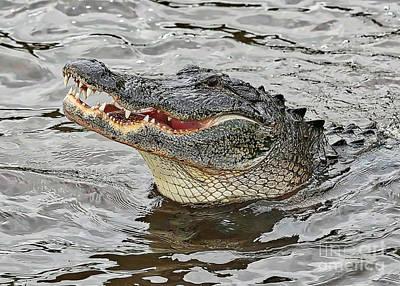 Happy Florida Gator Poster by Carol Groenen