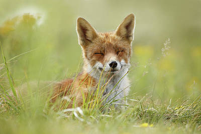 Happy Fox Is Happy Poster by Roeselien Raimond