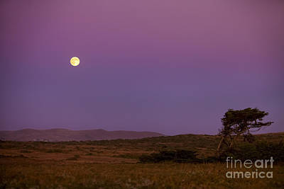 Harvest Moon Over Bodega Bay Poster by Diane Diederich