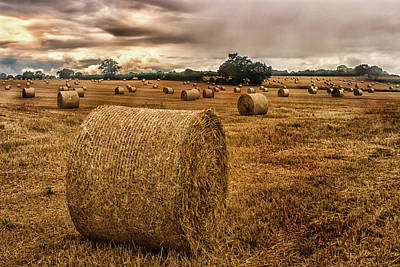 Hay Bales Poster by Martin Newman