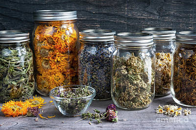 Herbs In Jars Poster