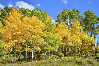Poster featuring the photograph High Country Aspens by Ray Mathis