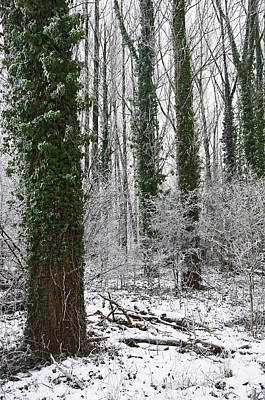 Hoarfrost In Forest  Poster