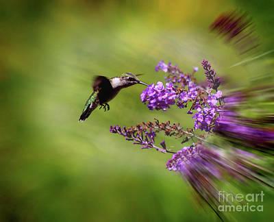 Hummingbird At Butterfly Bush Poster by Karen Adams