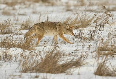 Hunting Poster by Scott Warner