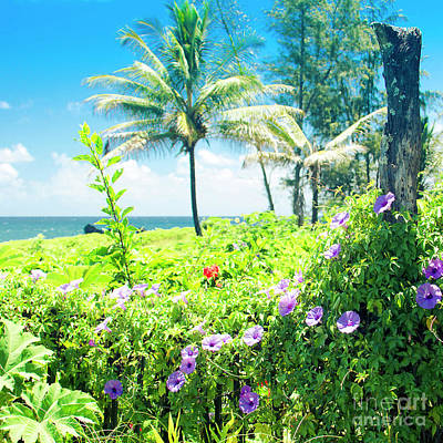 Poster featuring the photograph Ipomoea Keanae Morning Glory Maui Hawaii by Sharon Mau