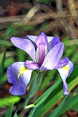 Iris Poster by Rosemary Aubut