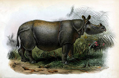 Javan Rhinoceros, Endangered Species Poster by Biodiversity Heritage Library