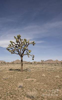 Joshua Tree Poster by Juli Scalzi