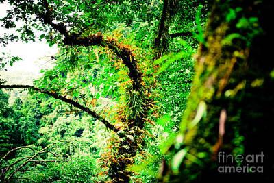 Jungle Annapurna Yatra Himalayas Mountain Nepal Poster by Raimond Klavins
