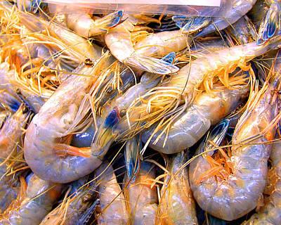 Just Caught Shrimp Poster by Merton Allen