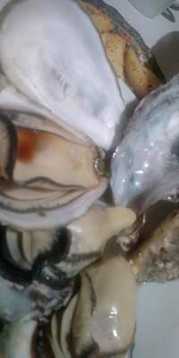 Oysters In Ponzu Vinegar Poster