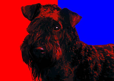 Kerry Blue Terrier Poster by Alexey Bazhan