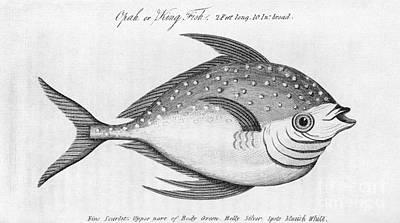 King Fish, Historical Artwork Poster