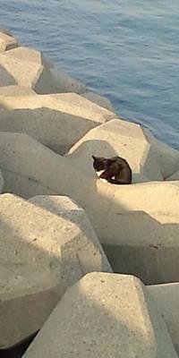 Koneko Means A Kitten. Poster
