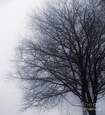 Leafless Tree In Fog Poster