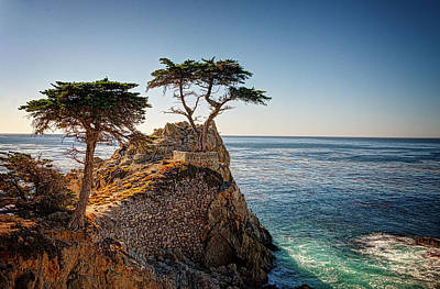 Lone Cypress Tree Poster by James Hammond