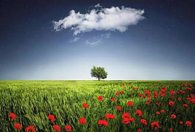 Lone Tree A Poppies Field Poster by Bess Hamiti