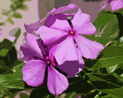 Madagascar Rosy Periwinkle Poster