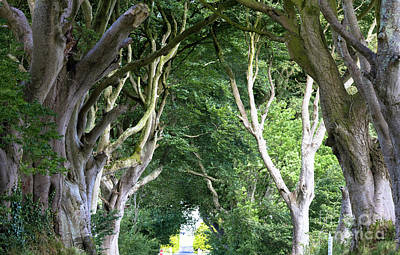 Magical Forest, Northern Ireland Poster