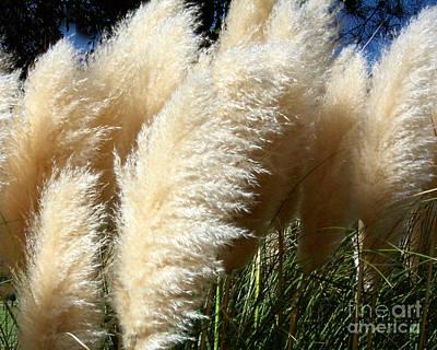 Majestic Pampas Grass Poster by Merton Allen