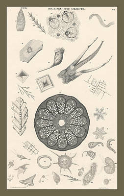 Microscopic Objects Poster