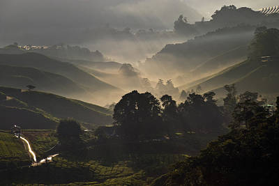 Morning At Cameron Highlands Poster