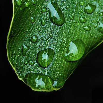 Morning Rain Poster by Scott Pellegrin