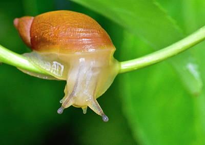Morning Snail Poster