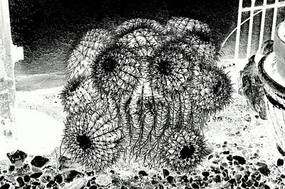 My Anguish In The Face Of A Barrel Cactus Poster by Antonia Citrino