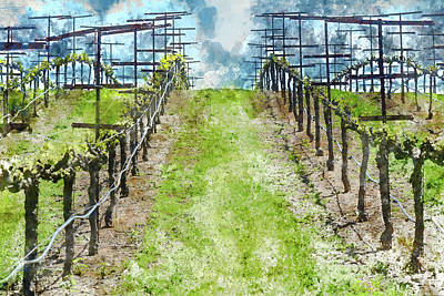 Napa Valley Vineyard In The Spring Poster by Brandon Bourdages