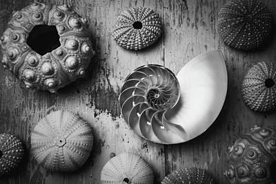Nautilus Shell In Black And White Poster