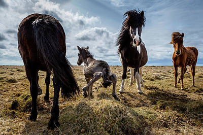 Newborn Foal Taking His First Steps Poster by Panoramic Images