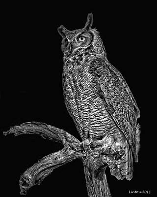 Night Owl Poster by Larry Linton
