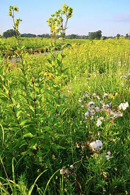 Nippersink Creek Wildflowers Poster